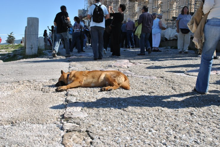 dog in parthenon