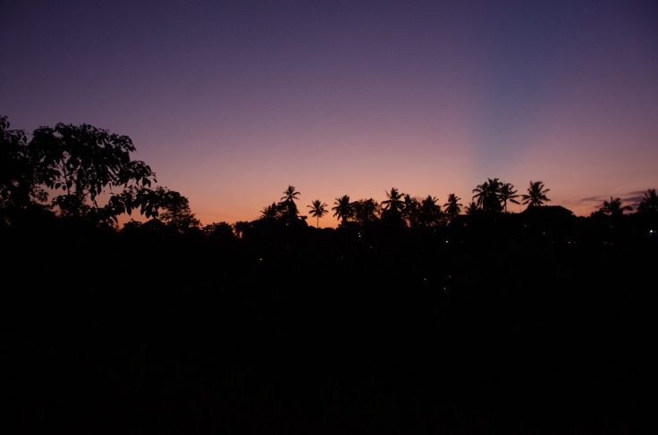 Ubud sunset - the palm trees in silhouette against a purple sky