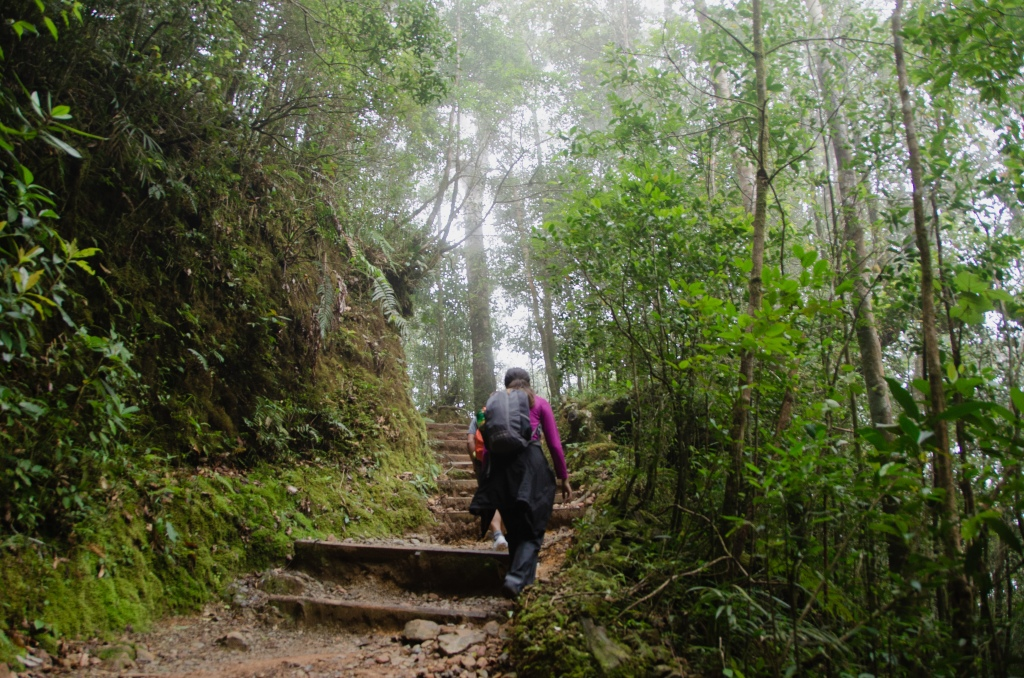 A female hiker, wearing a pink t-shirt and grey clothes, walks up a staircase carved into the mountain surrounded by the green jungle.