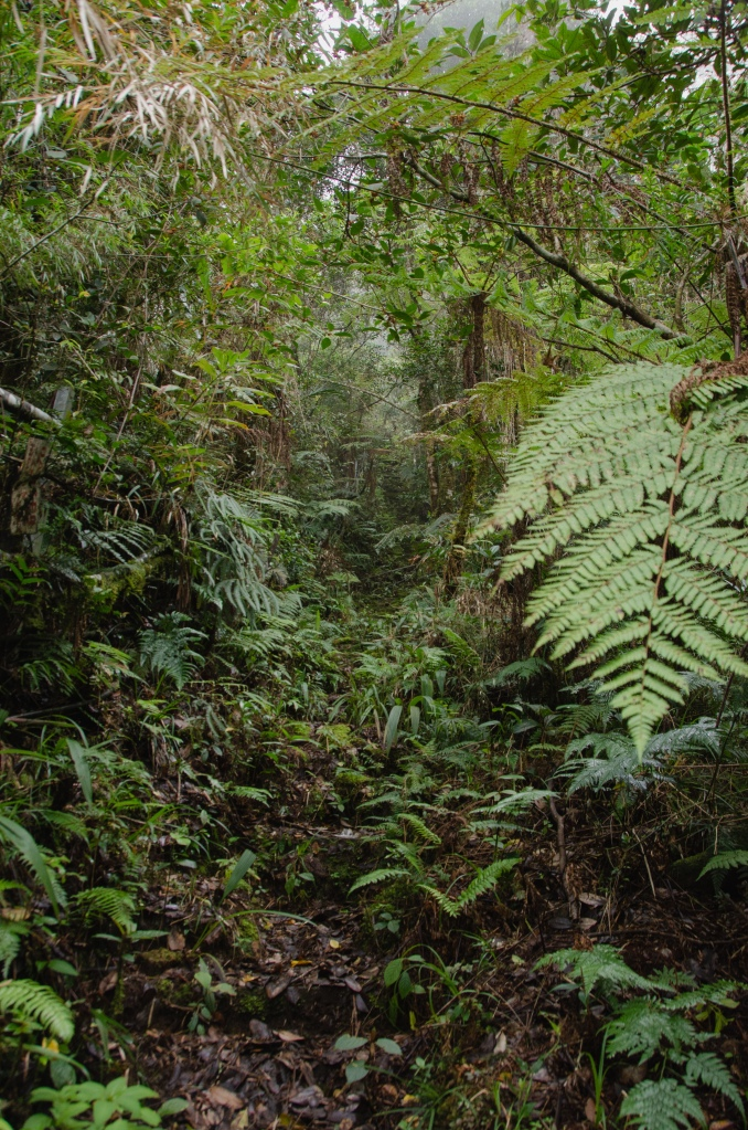 A picture of the jungle - focusing on ferns.